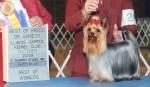 Teresa's Championship Last Stand of Exmoor