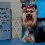 Theodore's Champion