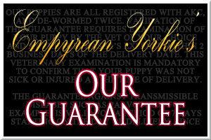 Empyrean Yorkie Guarantee