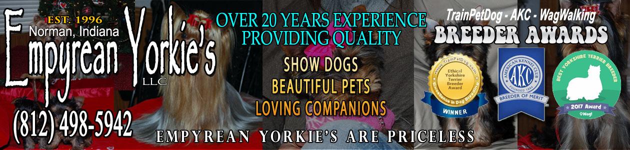 Empyrean Yorkie's